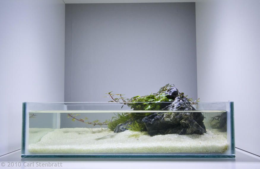 3 liter ~ Oasis by Carl Stenbratt - table aquarium for axolotl