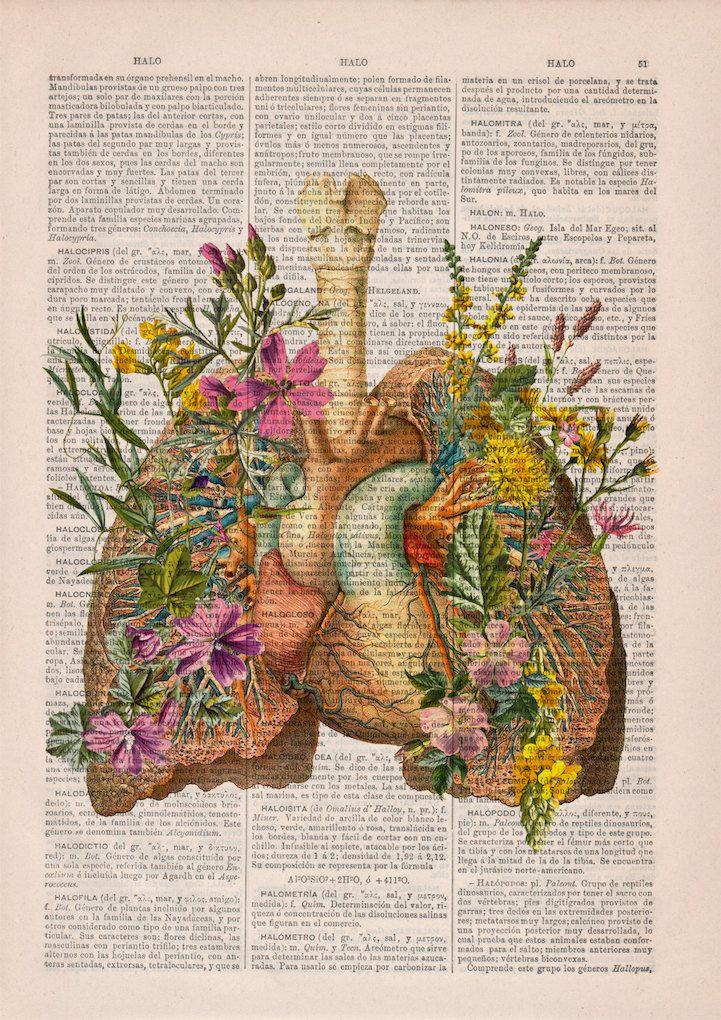 PRRINT ilustraciones anatomia flores 5 | Wallpaper\'s | Pinterest ...