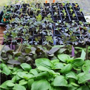 Les travaux du mois d'octobre au potager bio | Potager bio, Potager, Potager biologique