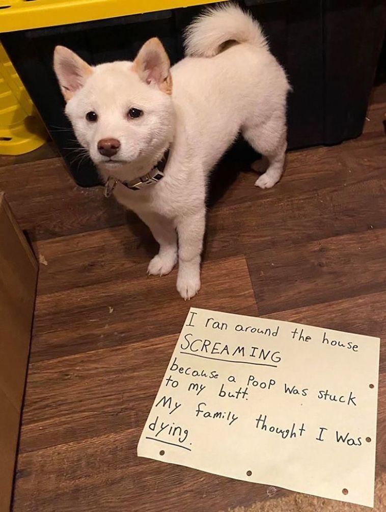 shaming dog