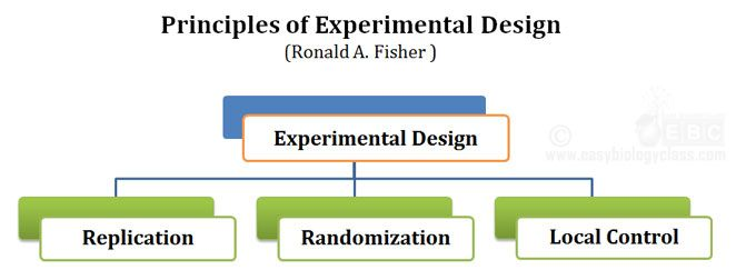 Replication Randomization Local Control In 2021 Biology Class Short Notes Research Methodology