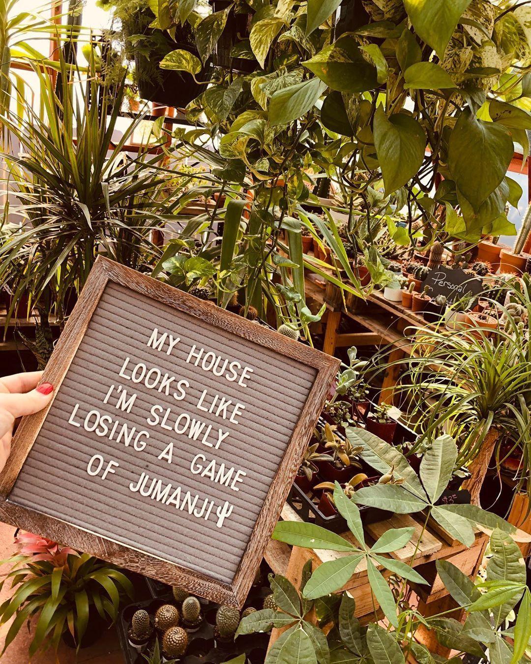 SucculentCity.com   Community of Succulent, Cacti & Plant Lovers