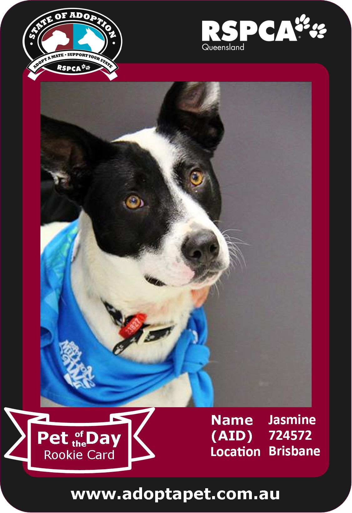 Looking For A Super Friendly Girl I M Jasmine I Love Having Human Company And Also Toys And Games To Keep Me B Support Animal Pet Care Pet Adoption
