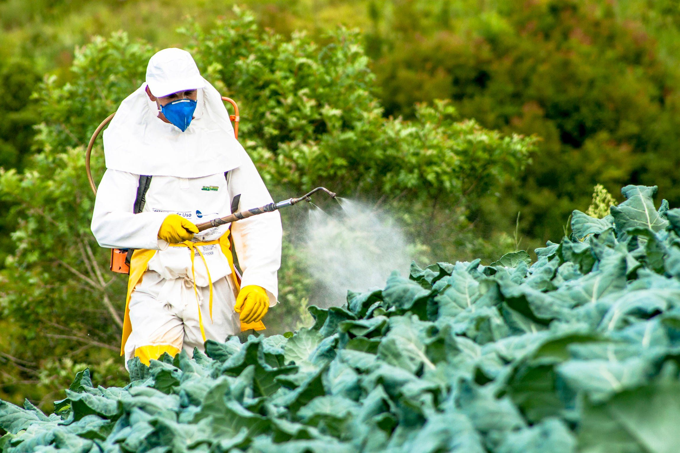 What The 289 Million Verdict Against Monsanto Means To