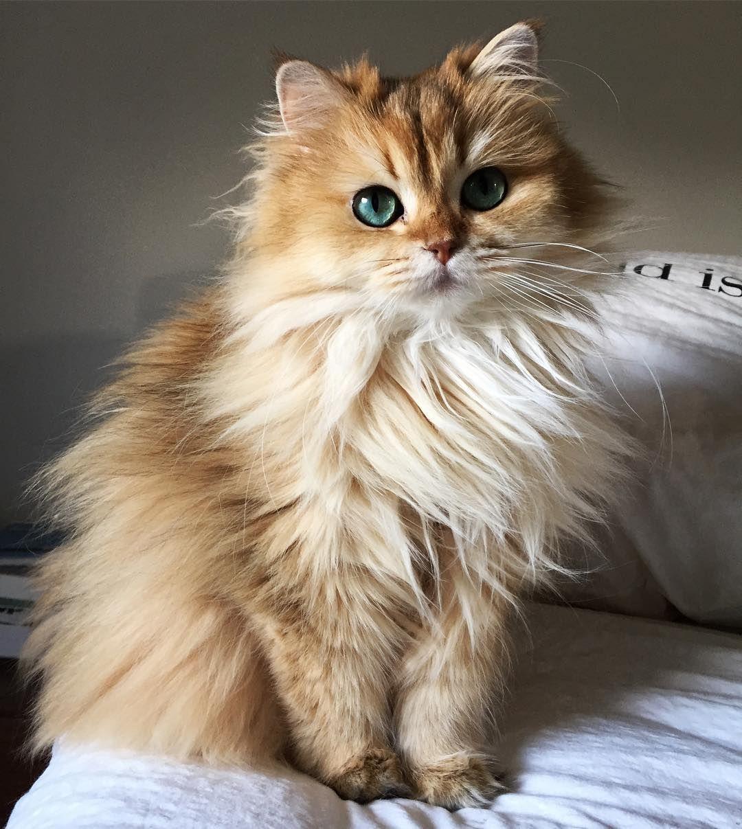 Pin by sally on ღ cute animals ღ Cute cats, Beautiful