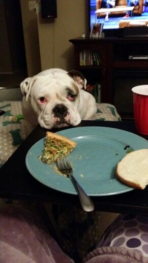 Please God...let me have just ONE bite and I swear I'll behave!
