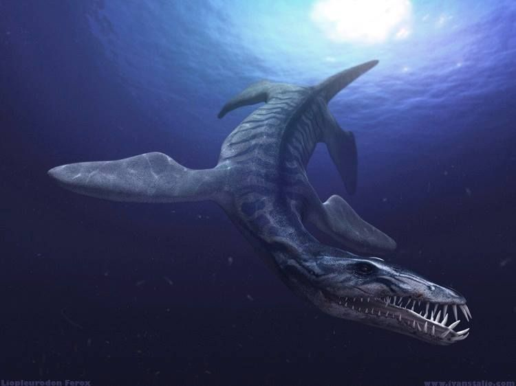 10 Terrifying Prehistoric Creatures — That Weren't Dinosaurs #prehistoriccreatures 10 Terrifying Prehistoric Creatures That Weren't Dinosaurs #prehistoriccreatures
