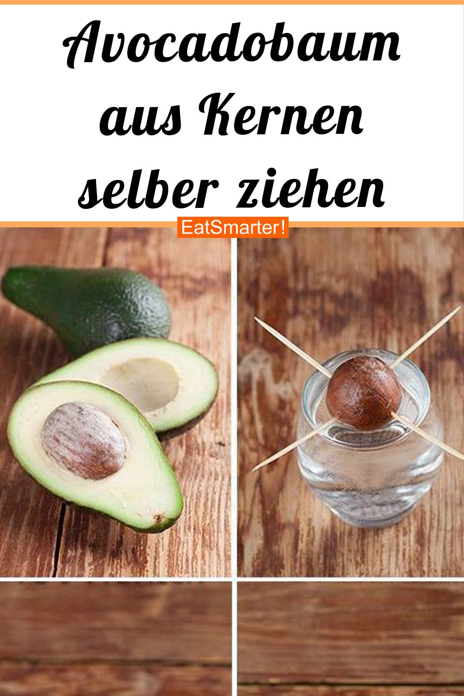 So kannst du Avocados selber pflanzen!