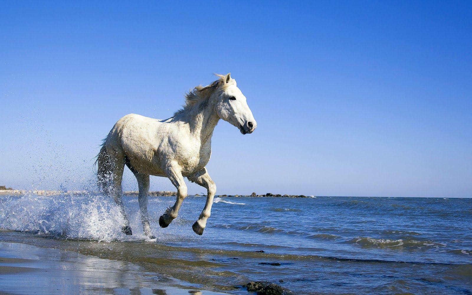 Simple Wallpaper Horse Beach - dd3595638aed259685d0033385c43d7b  Image_64145.jpg