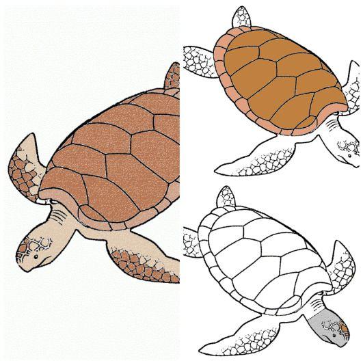 Tarjetas tres partes Montessori de la anatomía de la tortuga ...