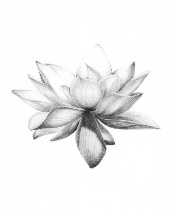 Lotus Flower #lotusflower