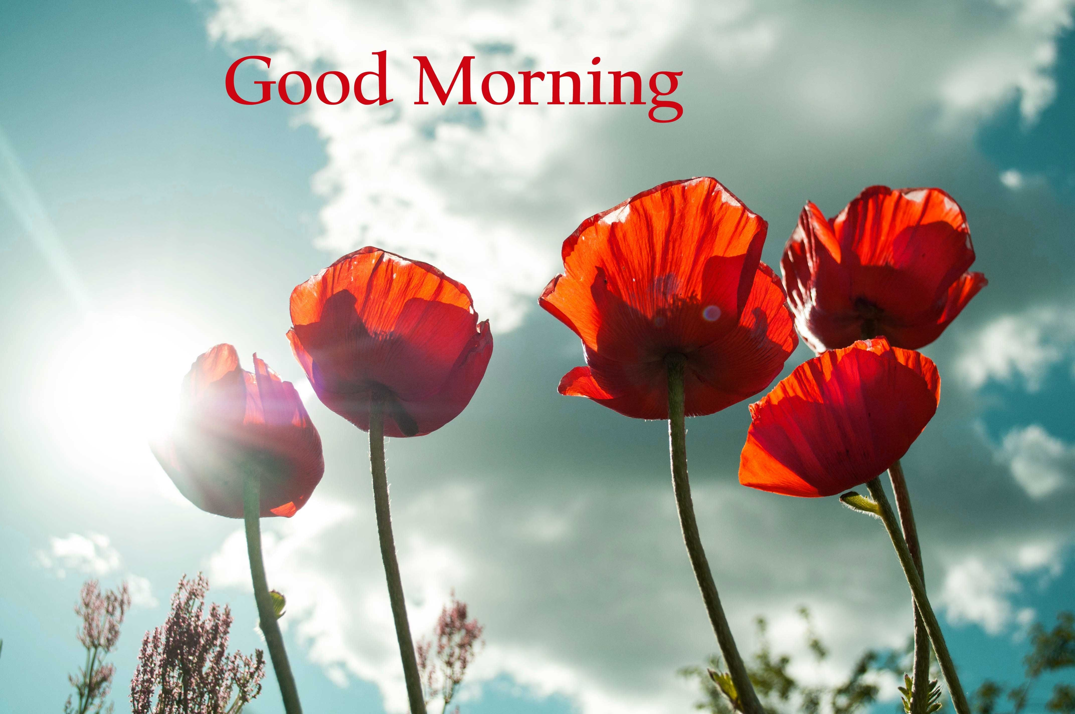 38 Good Morning Flower Images For Free Download Hd Pics Good Morning Beautiful Images Good Morning Beautiful Flowers Good Morning Flowers