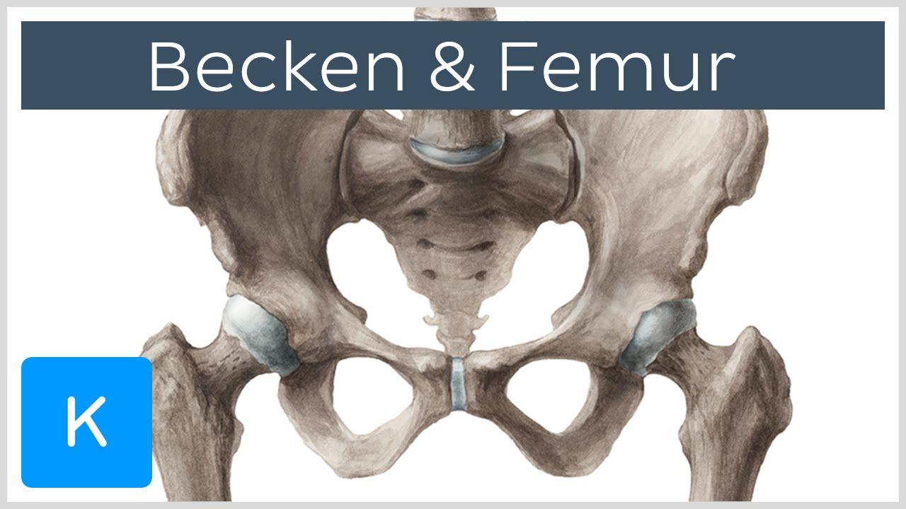 Becken und Femur - Knochen - Anatomie des Menschen | Kenhub ...