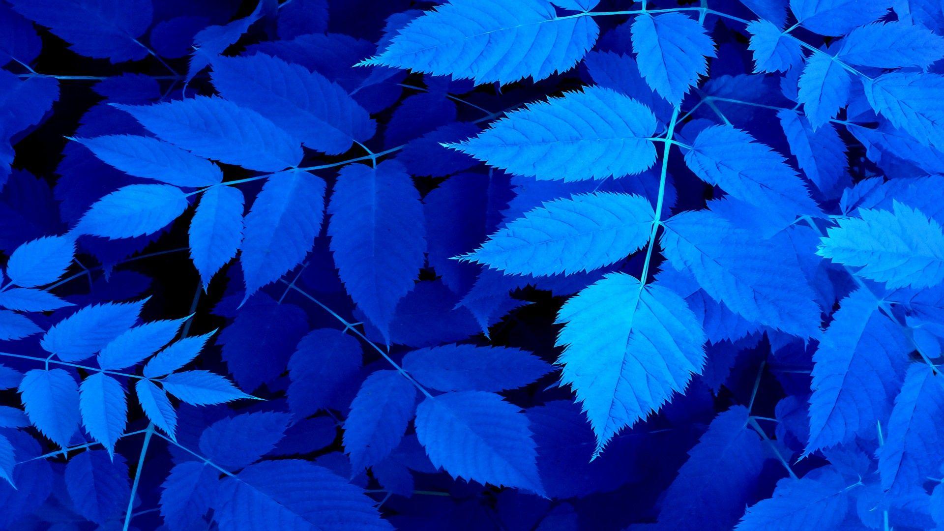 Голубой лист фото