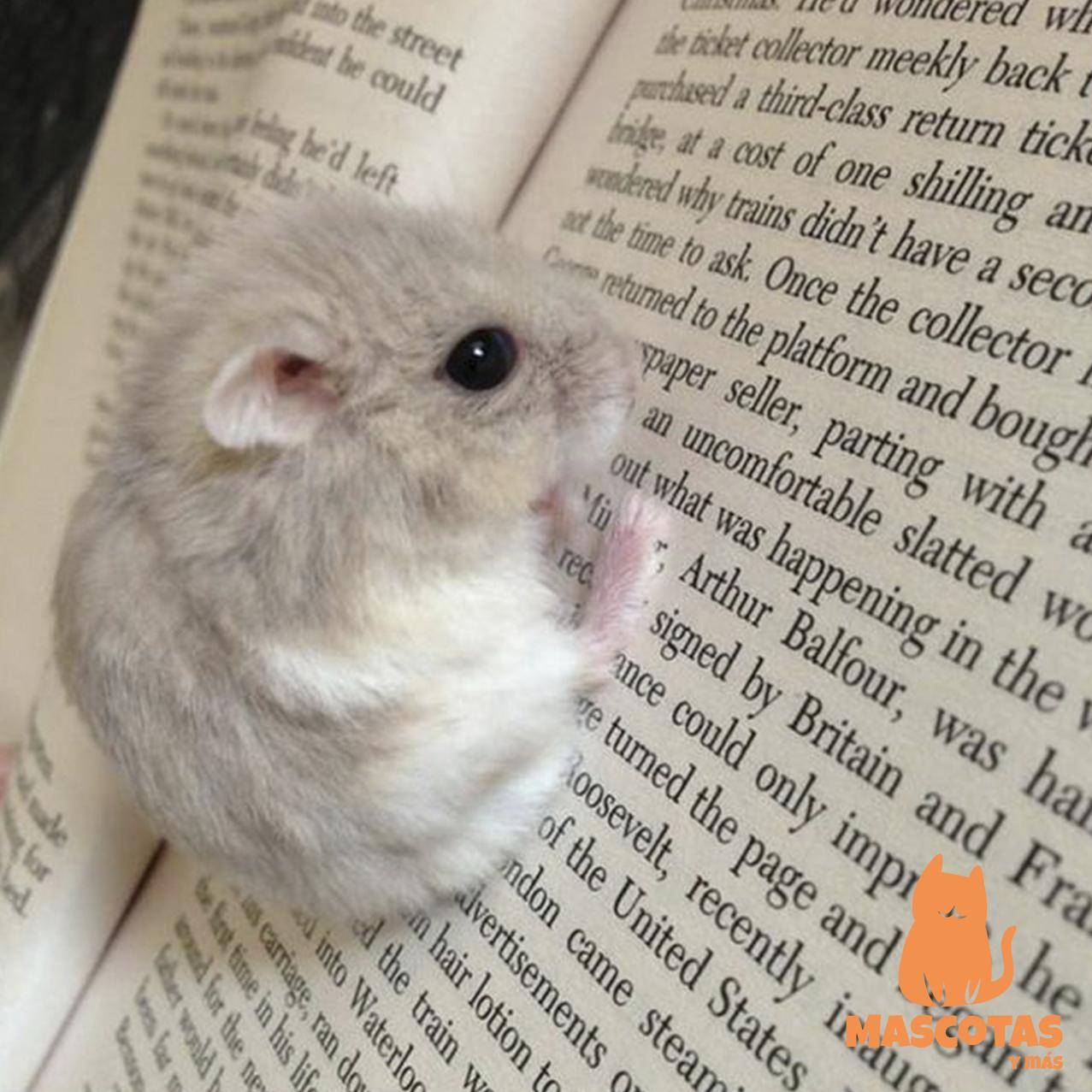 Hamsters Caracteristicas Razas Y Cuidados Cute Hamsters