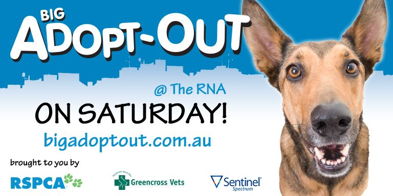 The Bigadoptout Is On Tomorrow At The Rna In Brisbane Over 30 Animal Welfare And Rescue Groups Have Joined Forces To Bri Buy A Dog Dog Adoption Dogs For Sale