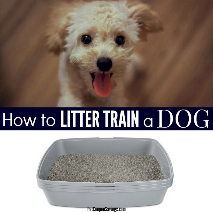 Did You Know You Can Litter Train A Dog Pet Owners Who Have