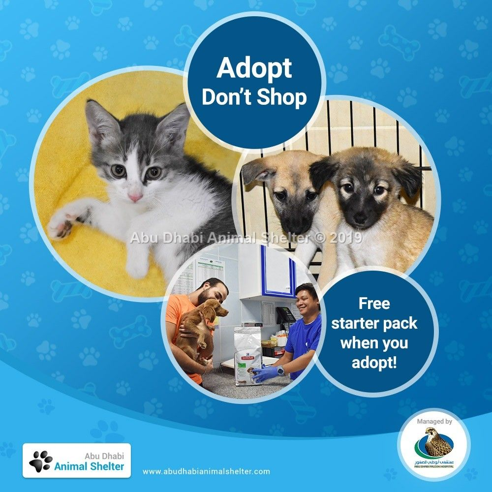 Get A Smooth Start To Your Pet Ownership Journey With Our Free Starter Food Pack Enough For 1 Week When You Adopt A Pet Fro Abu Dhabi Animal Shelter Animal