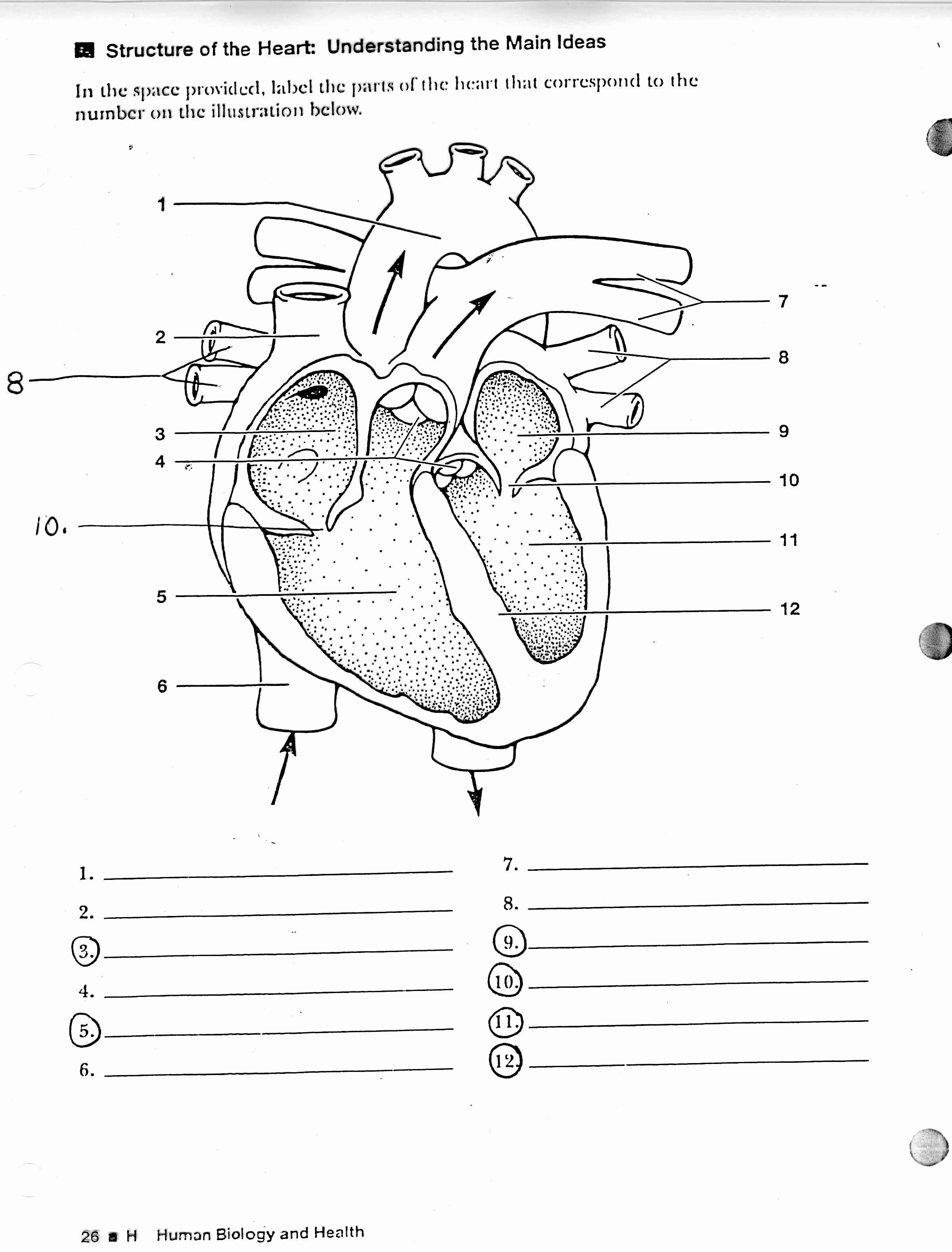 Teach child how to read: Human Heart Printable Worksheets