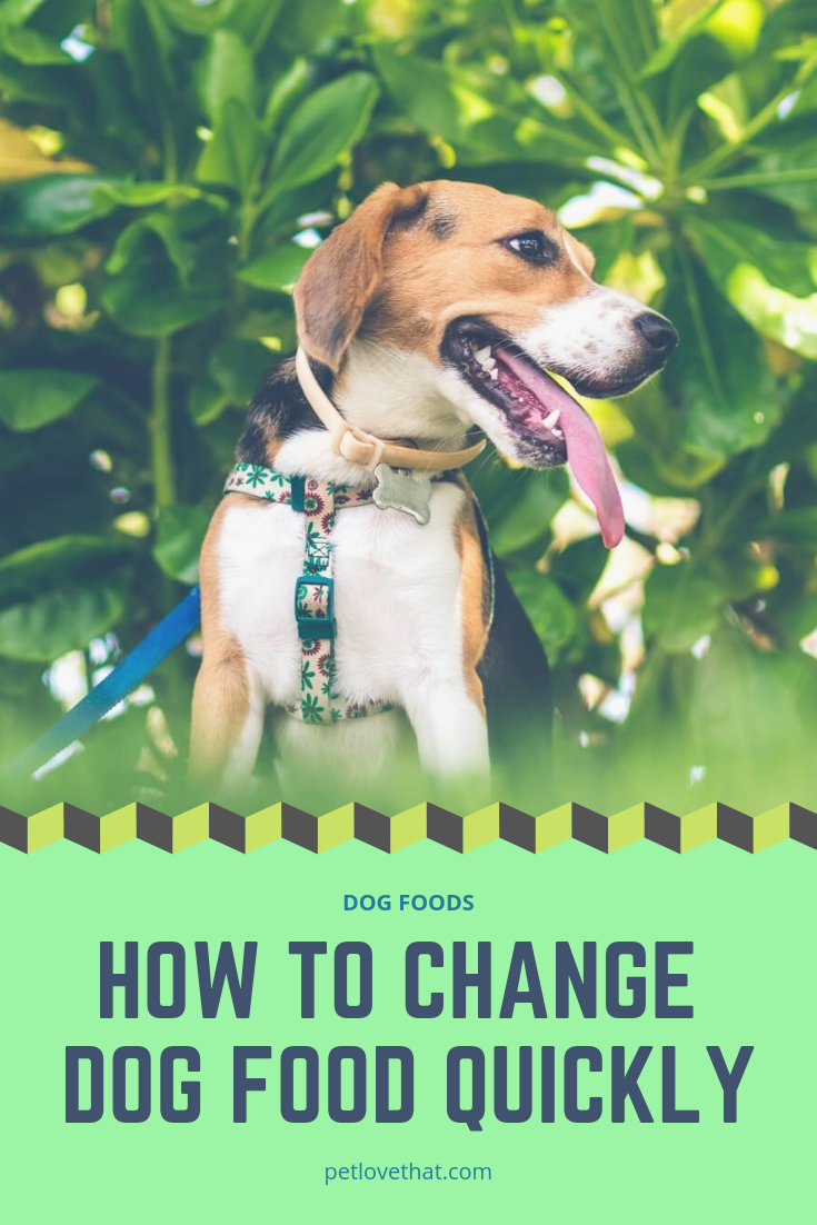 Many Dog Owners Wonder Is It Good Or Bad To Change Dog Food Or