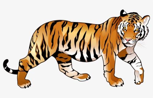 Thumb Image - Transparent Background Tiger Clip Art, Transparent Clipart in  2020 | Tiger images, Tiger pictures, Tiger cartoon drawing