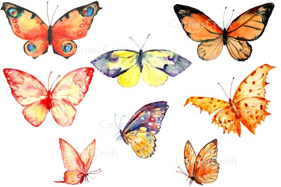 Butterfly watercolor. Clipart orange