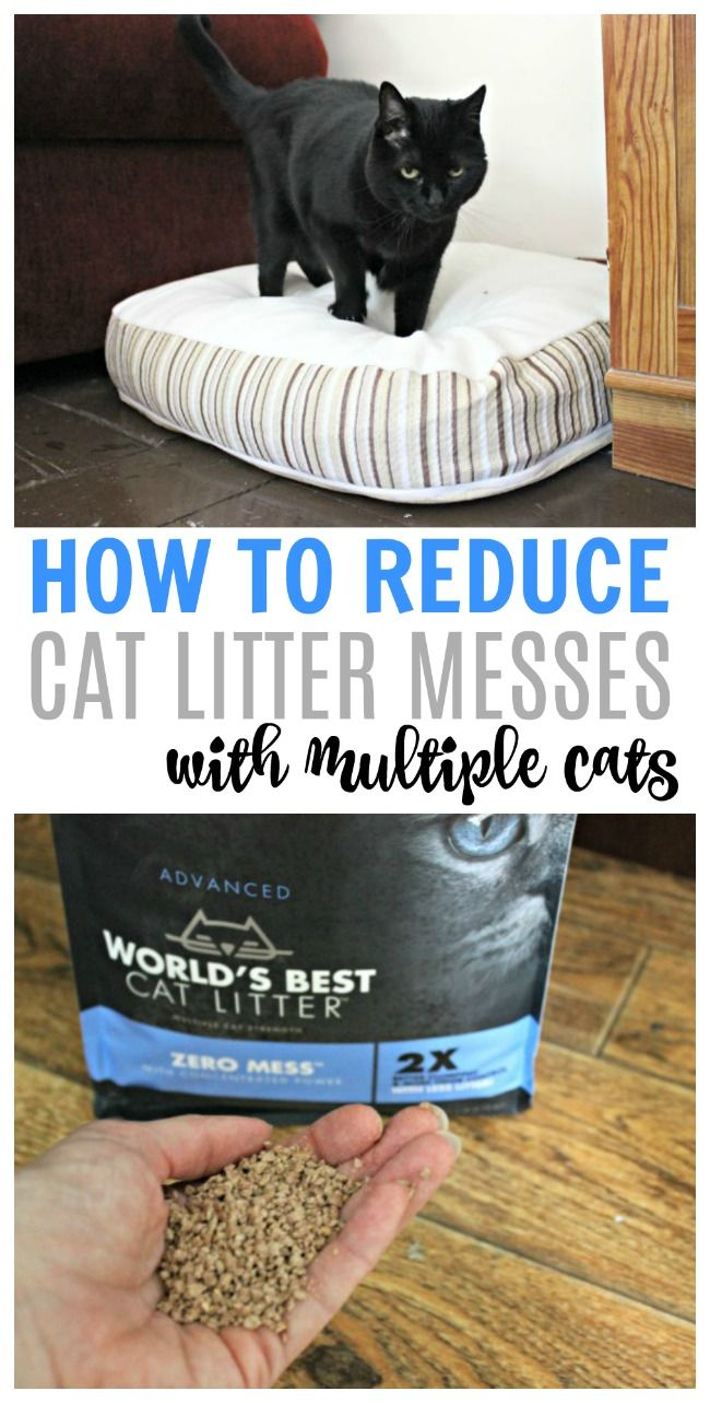 How To Reduce Cat Litter Mess With Multiple Cats Best Cat Litter