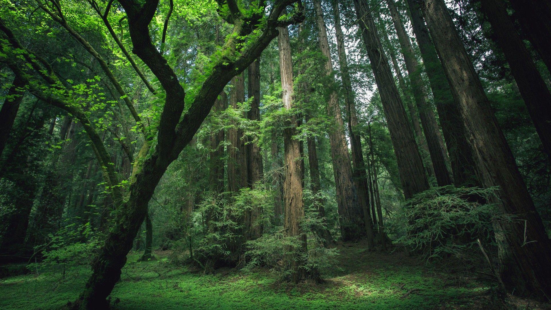 森の中に光が届いていてきれいな光景の壁紙 森 風景 景色