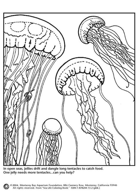 Coloring page jellyfish   Awesome Crafts!   Pinterest   Jellyfish ...