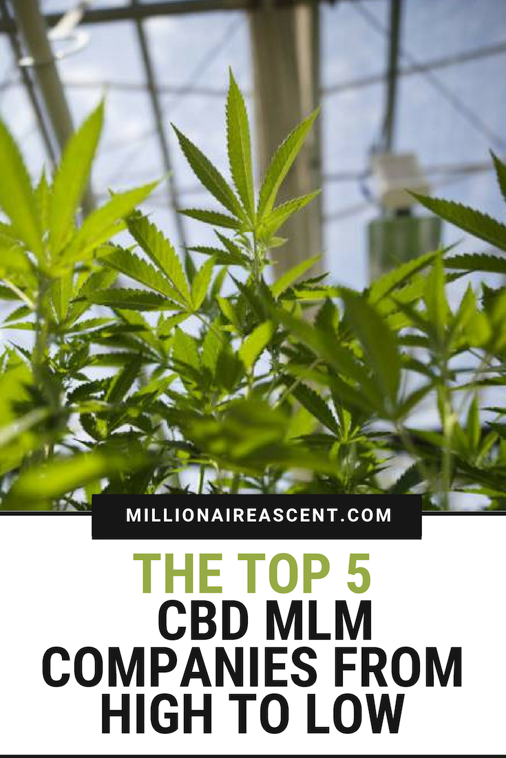 The Top 5 CBD MLM Companies from High to Low | CBD Business