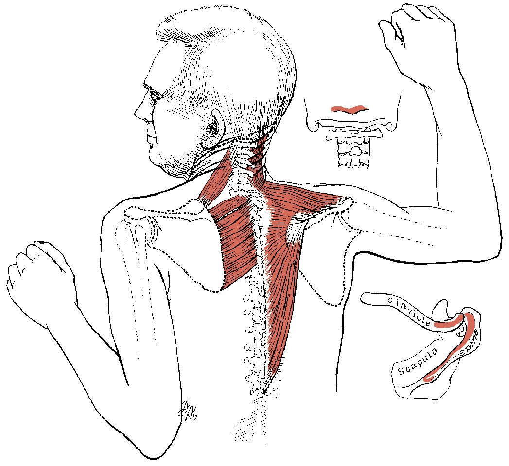 muscle spasms A muscle spasm is an involuntary contraction of a muscle or feeling of muscle tightness that usually occurs suddenly, is often painful, and typically does not last long.