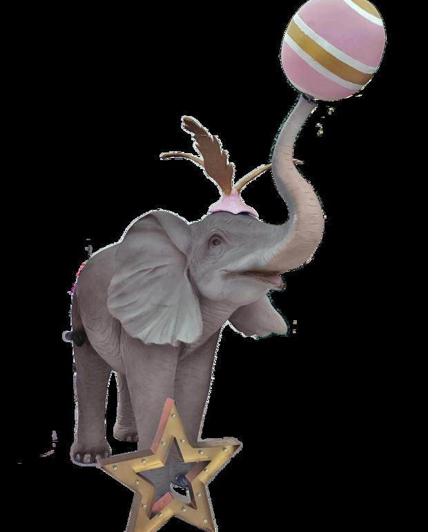 Pink Circus Elephant Circus Elephant Elephant Animals