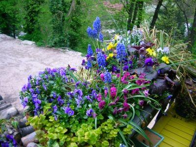 Balcon fleuri gramin es viola heuch re et muscari for Jardiniere balcon hiver
