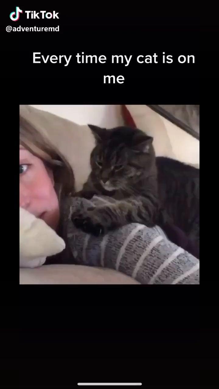 Cat Love Awwwww Video In 2020 Cute Baby Animals