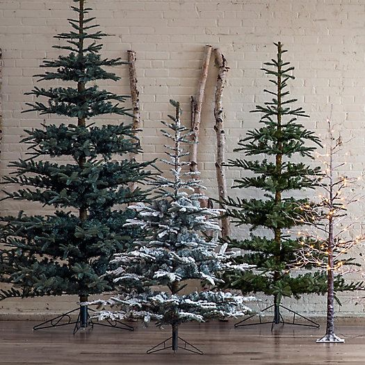 Types Of Fir Trees For Christmas: Types Of Christmas Trees, Noble Fir Tree