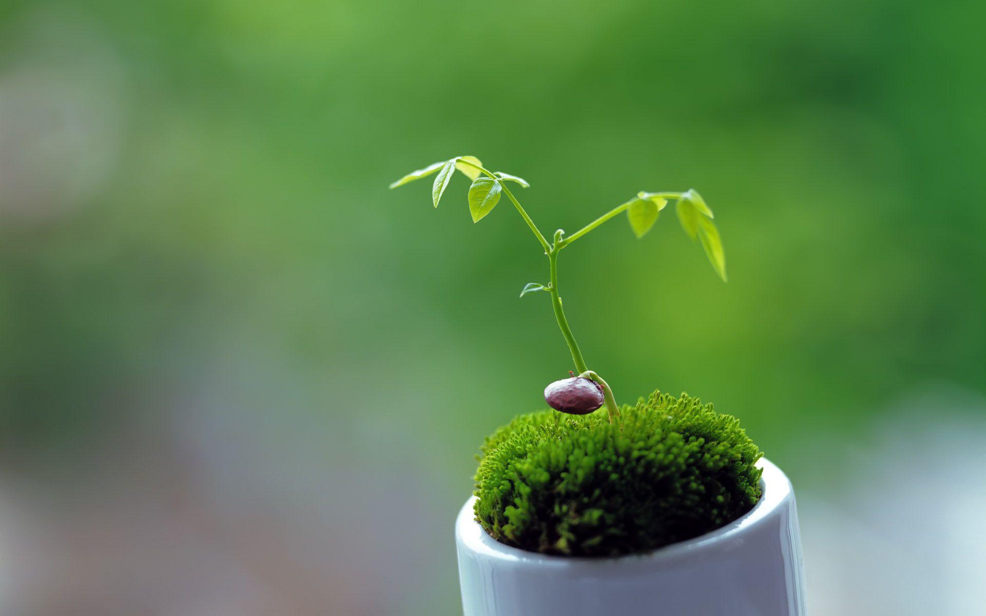 Background image 8851 - Little Plant Wallpaper Hd 8851