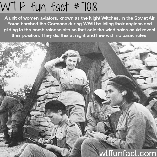 Night Witches Fun Facts