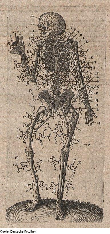 Роберт Фладд (1574-1637), английский физик, астролог и мистик ...