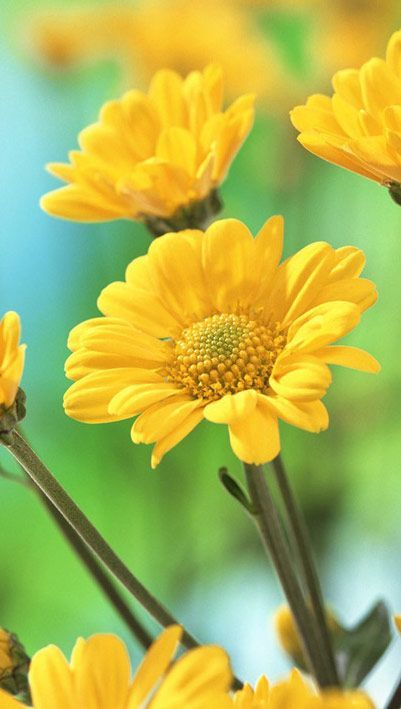 Image Result For Wonderful Images Flower Images Wallpapers Beautiful Flowers Wallpapers Yellow Flower Wallpaper