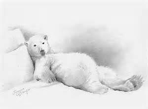 polar bear drawing - Bing Images