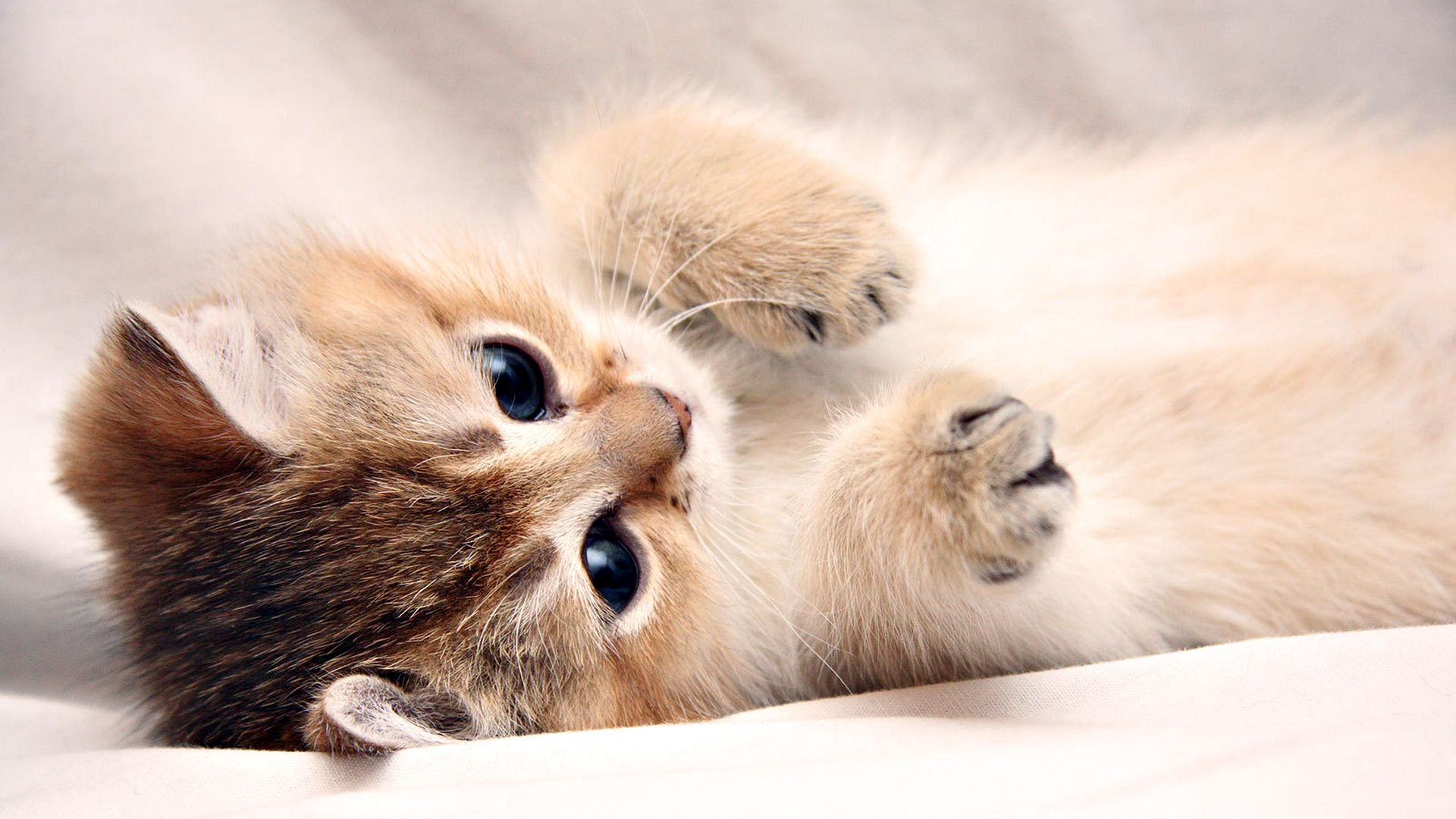 Image detail for Widescreen Laptop Wallpapers Cute Kitty Laptop