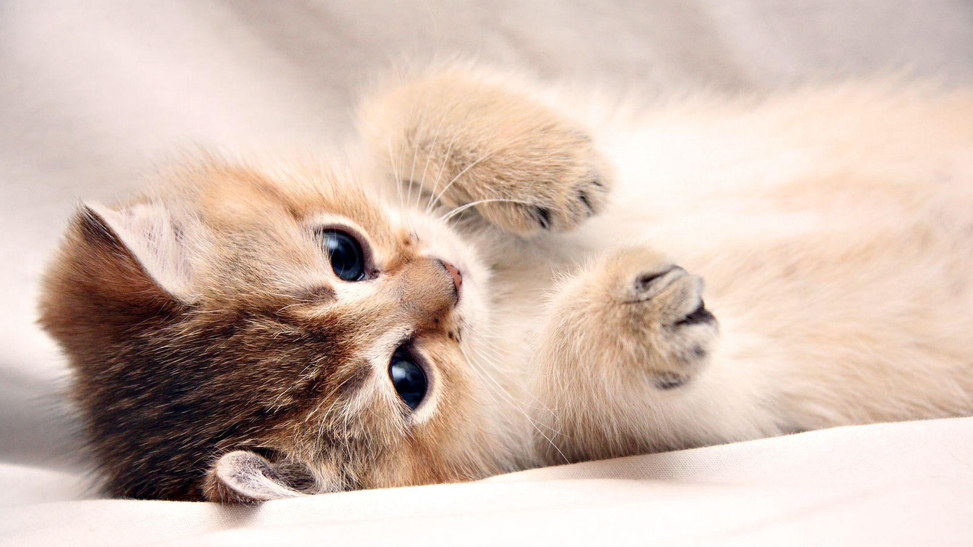Lovely Cute Kitten Kitty Pictures Free Cell Ph 6178 Wallpaper Kittens Cutest Cute Cat Wallpaper Kitten Wallpaper