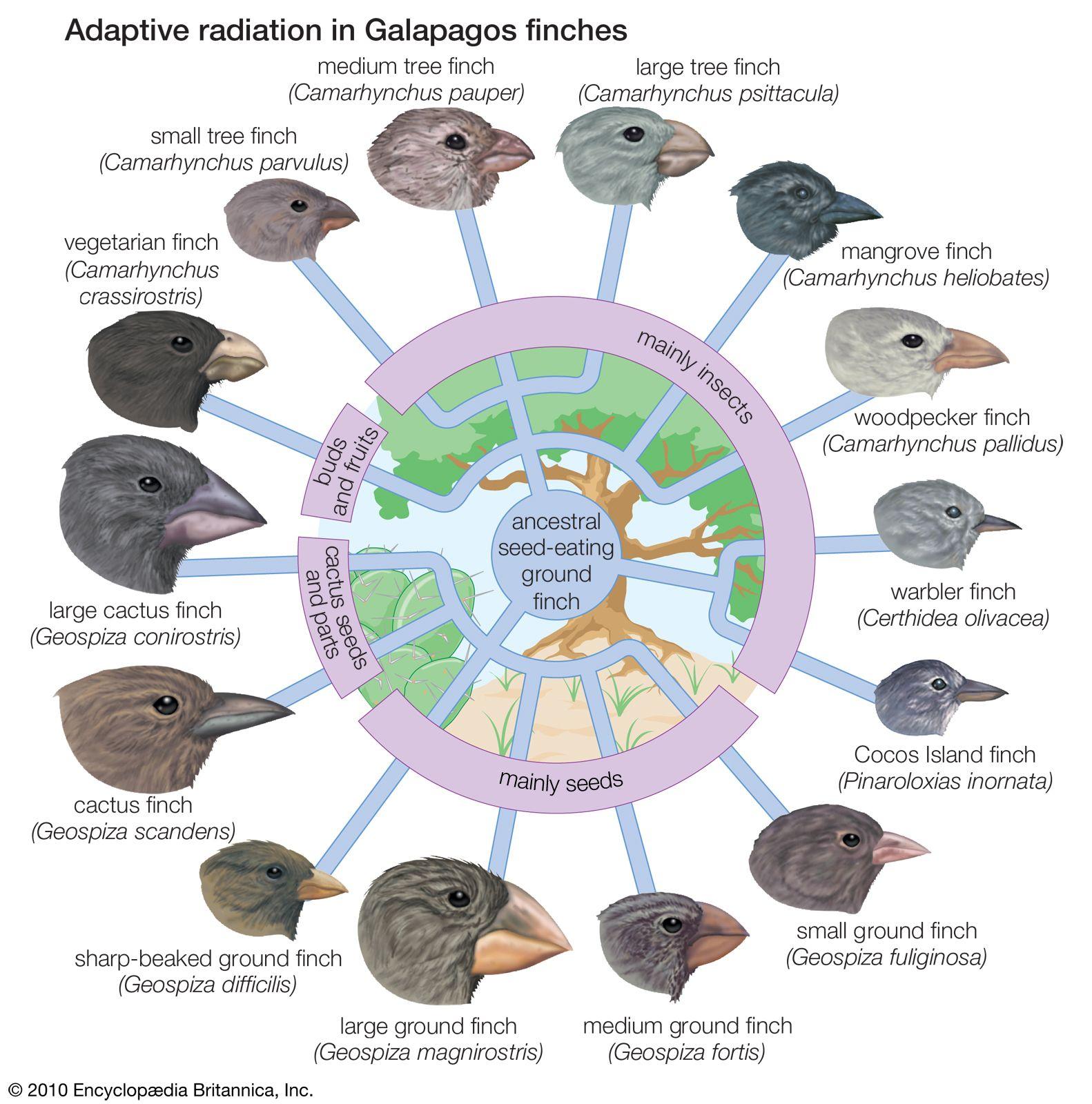 What Darwin Never Knew Evolution Pinterest Darwin Evolution