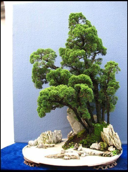 pin von erl rs auf bonsai pinterest baum haus und. Black Bedroom Furniture Sets. Home Design Ideas