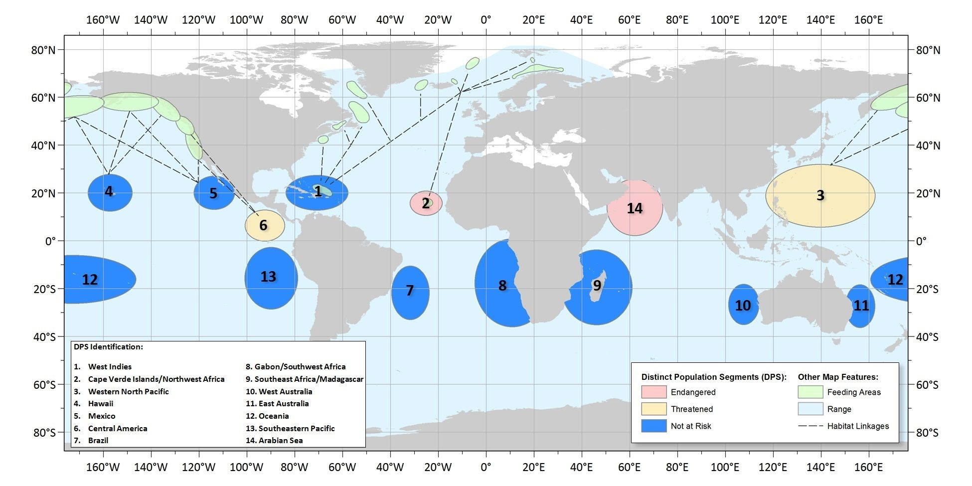 whale route Sperm migration
