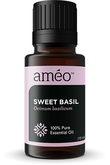 SWEET BASILOcimum basilicum With a sweet and spicy scent and flavor, Sweet Basil essential oil is used most often in cooking and as a dietary supplement; however, it also has many aromatic and topical applications. Sweet Basil oil is beneficial both physically and mentally, and has become a great go-to product that oil users should always have on hand.
