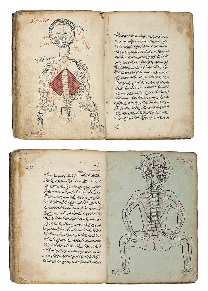 تشريح بدن انسان Islam, Anatomi