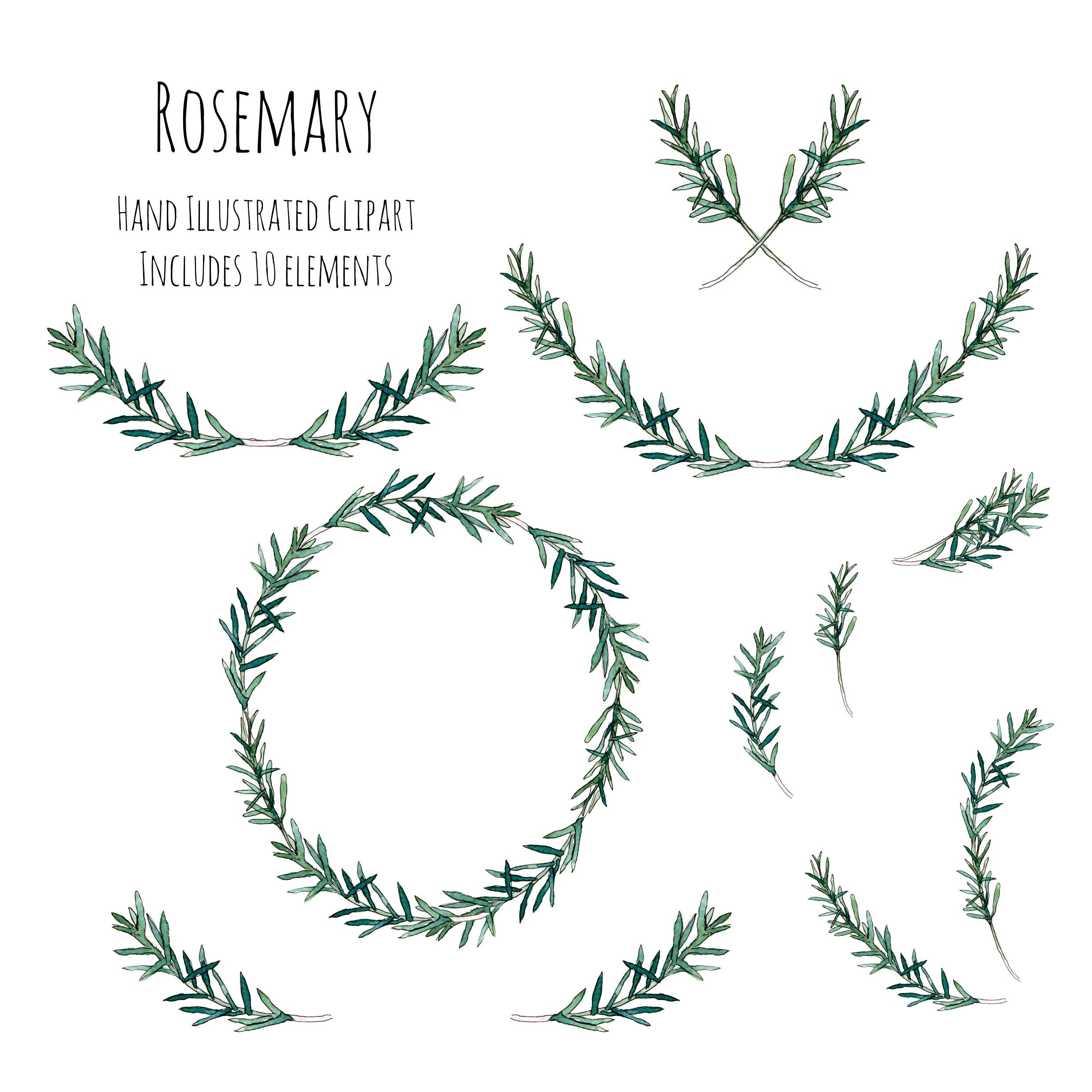 Photo of Clipart – Illustration – Rosemary herb – wreath, frame and decorations
