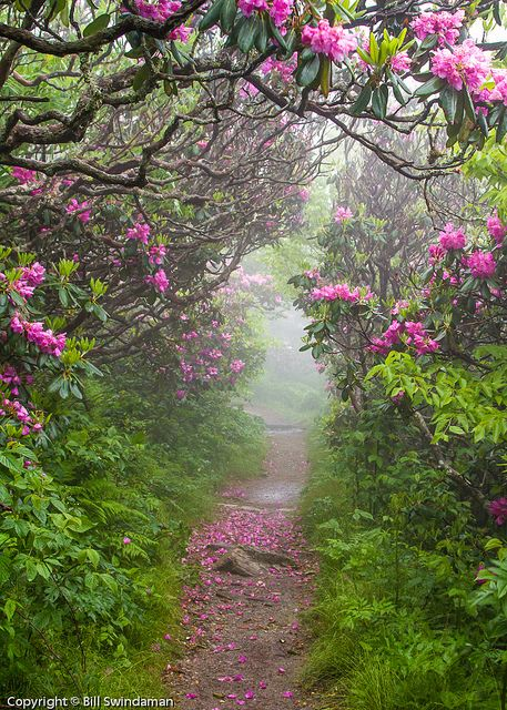 Friday Flowers Craggy Gardens Nature Beautiful Nature
