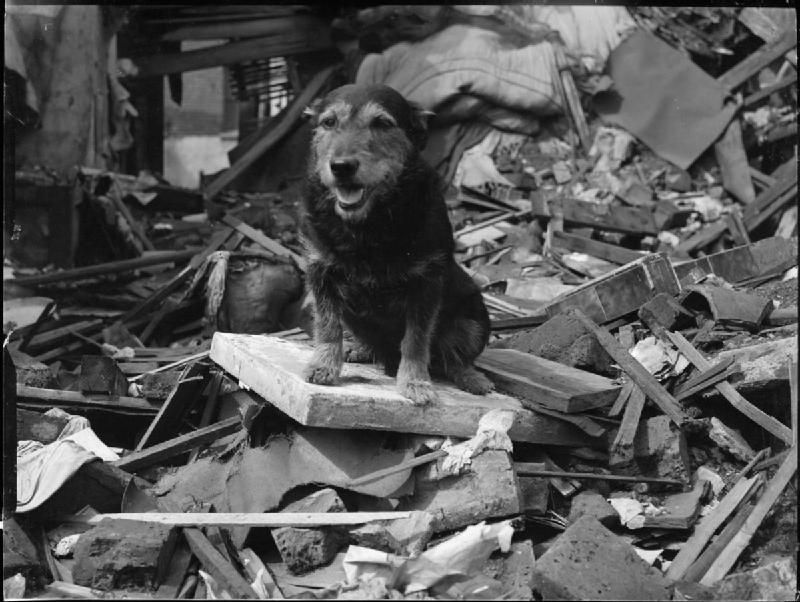 A rescue dog named Rip rescued a hundred air raid victims
